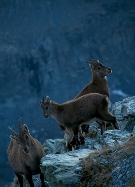 Landschaften_Zermatt10
