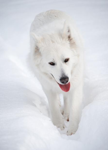 Tier_Haustiere2