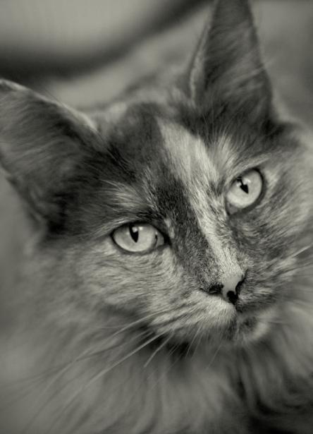 Tier_Haustiere5