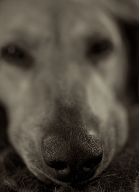 Tier_Haustiere6