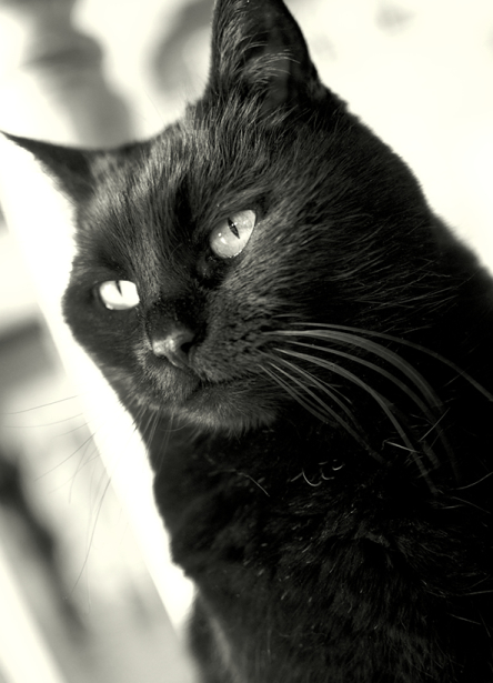 Tier_Haustiere8