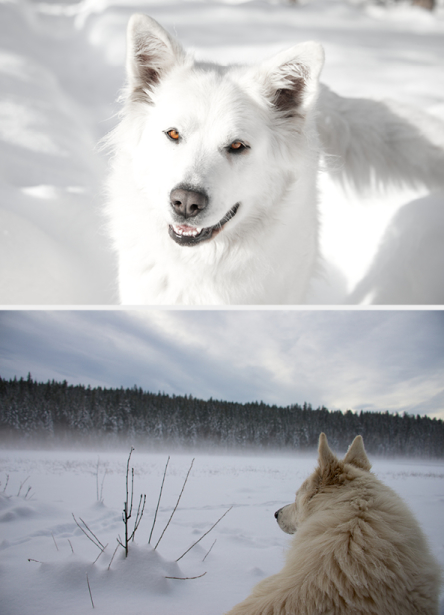 Tier_Haustiere3