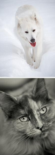 Tier_Haustiere_Homepage