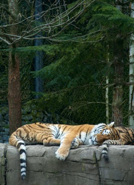 Tier_Zoo_Zuerich_20134