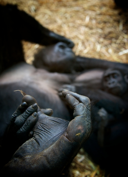 Tier_Zoo_Zuerich_20141