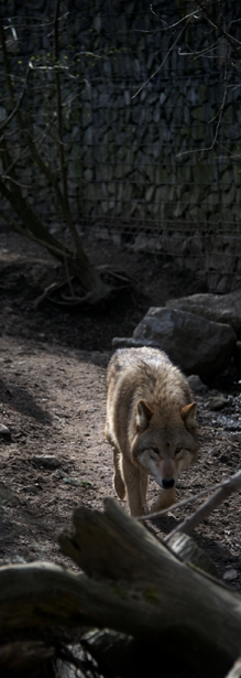 Tier_Zoo_Zuerich_201416