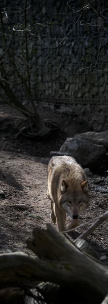 Tier_Zoo_Zuerich_201416