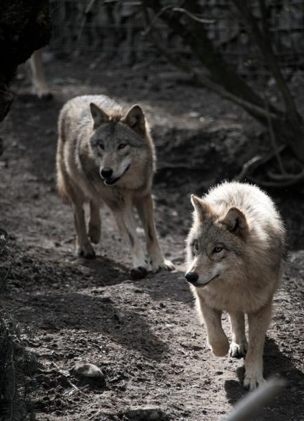 Tier_Zoo_Zuerich_201417