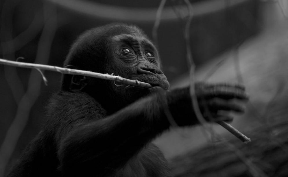 Tier_Zoo_Zuerich_20143